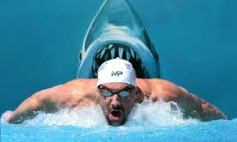 phelps-shark