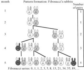 rabbits-fib